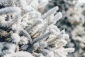Zima po niderlandzku (cztery pory roku) (www.jezykniderlandzki.pl)